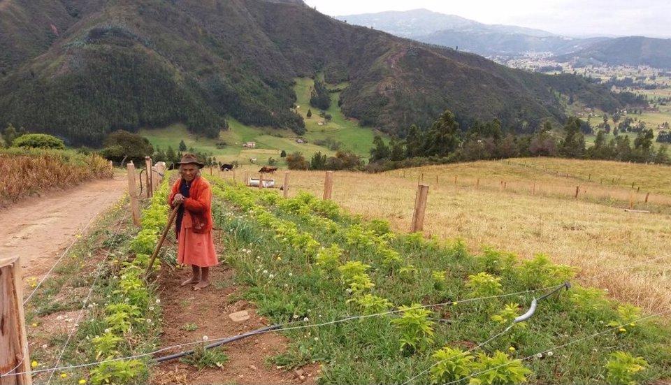 El programa de ganadería sostenible busca el cuidado de los bosques nativos