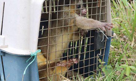 Liberaron 80 animales en la Hacienda Nepal, en La Dorada