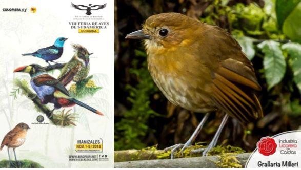 Participantes de VIII Feria de Aves de Sudamérica destacan labor ambiental de la Industria Licorera de Caldas