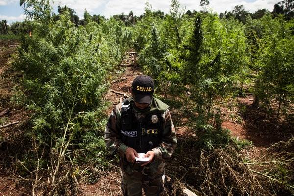 • En la frontera de Paraguay y Brasil, el narcotráfico produce escenas 'de película'