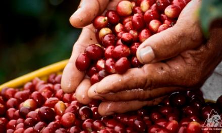 Gobierno Nacional debe asumir la defensa de los cafeteros colombianos