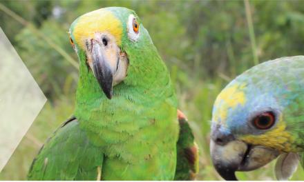 Corpocaldas implementa la tasa compensatoria de caza de fauna silvestre