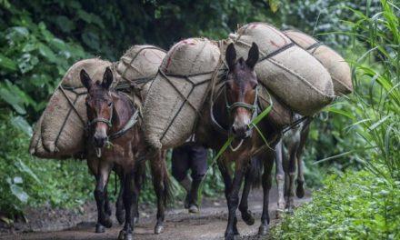 La producción nacional no es rentable: Dignidad Agropecuaria