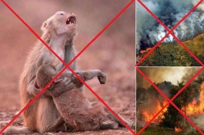 Desesperados por salvar la Amazonia usan hasta fotos falsas para pedir que se haga algo