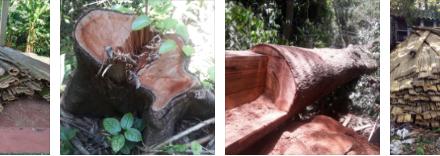 58 m3 de madera han sido incautados en Caldas por falta de autorización para su aprovechamiento