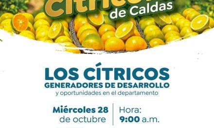 LOS CITRICOS GENERADORES DE DESARROLLO