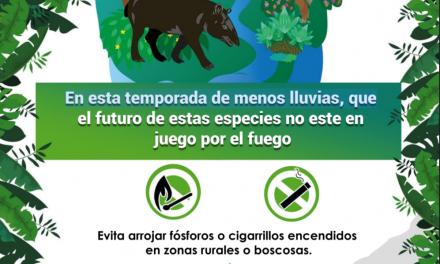 CAMPAÑA PREVENCIÓN DE INCENDIOS FORESTALES.pdf