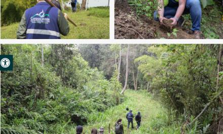 La Secretaría de Medio Ambiente sembró mil árboles en un predio del Ecoparque Los Alcázares-Arenillo, en el que fueron erradicadas 3.600 plantas de café que se plantaron de forma ilegal.