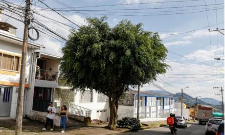 La Secretaría de Medio Ambiente de Manizales realiza jornadas de identificación y atención de árboles urbanos