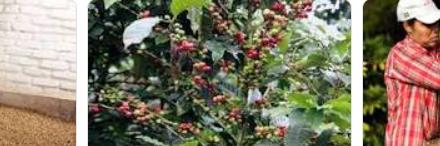 Producción y exportación de café continúan creciendo Producción de café de Colombia aumenta 30% en marzo • Las exportaciones de café crecieron 21% con respecto al mismo mes del año anterior.